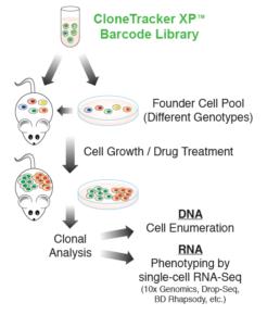 RNA-Seq Barcode Pooled Libraries
