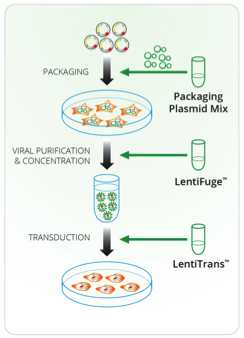 Lentivirus Production and Transduction Kit