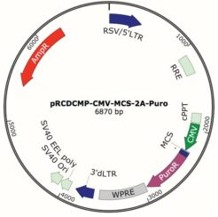 Constitutive cDNA Expression