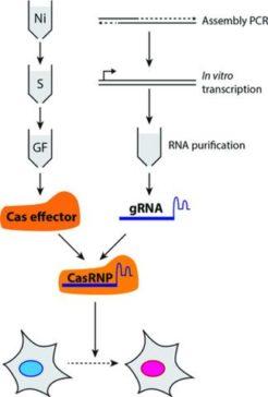 Cas9 Proteins